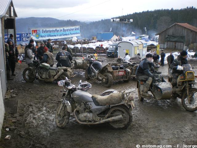 Concentration hivernale moto : des éléphants européens