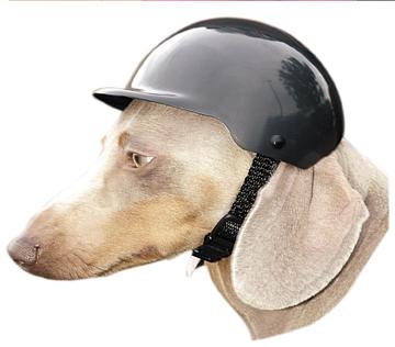 moto et chiens des lunettes pas si b tes moto magazine leader de l actualit de la moto. Black Bedroom Furniture Sets. Home Design Ideas